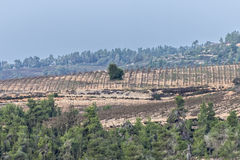 Holy hills, Israel Stock Photography