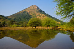 Holy indian mountain Arunachala Royalty Free Stock Photo