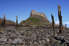 Holy Island Castle. Holy Isand Castle at low tide looking through the old boat stakes stock photos