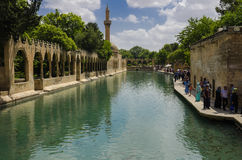 Holy Lake (Fish Lake), Urfa Stock Photography