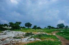 Holy land Series -fruit trees Hirbat Burgin Stock Images