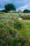 Holy land Series - Hirbat Burgin Royalty Free Stock Photography