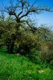 Holy Land Series - Upper Galilee -Ein Yorkat 5 stock image