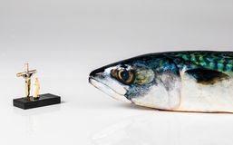 Holy Mackerel on White Background. Play on the British saying Holy Mackerel showing an actual mackerel fish being blessed stock image