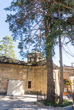 Holy pine on the territory of the Troyan Monastery in Bulgaria stock images