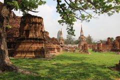 Ancient Temple With Tree And Pagodas. Holy place.  Old bricks walls with stupa Buddhist temples historical park summertime in Ayutthaya Thailand royalty free stock photography