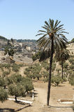 The holy places. Of the three religions in Israel - Kidron Valley and the Mount of Olives Stock Photography