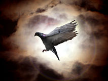 Holy spirit. Pigeon flying with the background of moonlight and clouds Stock Images