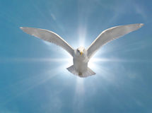 Holy Spirit. Bird with Glowing Sun Background Royalty Free Stock Photos