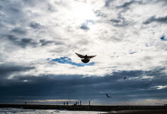 Holy spirit bird flies in blue sky, bright light shines from heaven, flying pigeon. Sea on the background Stock Images