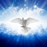 Holy spirit bird flies in skies, bright light shines from heaven. White dove - symbol of love and peace - descends from sky Royalty Free Stock Photos
