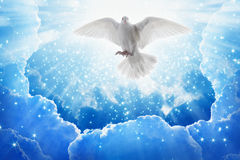 Holy spirit bird flies in skies, bright light shines from heaven. White dove - symbol of love and peace - descends from sky Stock Photos