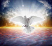 Holy spirit bird flies in skies, bright light shines from heaven. White dove - symbol of love and peace - descends from sky stock image