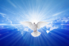 Holy Spirit came down like dove. Holy spirit dove flies in blue sky, bright light shines from heaven, christian symbol, gospel story Stock Images