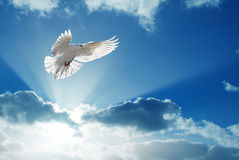 Holy Spirit dove flies in blue sky Stock Photos