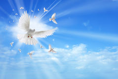Holy spirit dove flying in the sky Royalty Free Stock Image