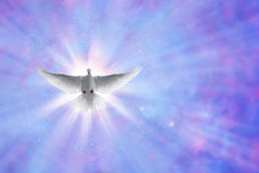 Holy spirit dove on shining sky with rays Royalty Free Stock Images