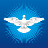 Holy Spirit. White dove as the Holy Spirit Stock Photography