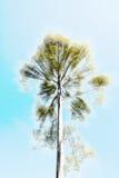 Holy tree Stock Photography