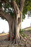 Holy Tree of Ancestors Royalty Free Stock Images