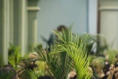 Free Holy Week Palm Sunday Royalty Free Stock Photo - 144839165