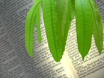 Holy words. Holy words decorated by mango leaves stock illustration