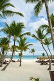 Ладонь и тропический пляж в тропическом рае. Временя holyday в Доминиканской Республике, Сейшельских островах, Вест-Инди, Филиппин Стоковая Фотография RF