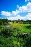 Holyland系列-以色列冬天场面7 免版税图库摄影