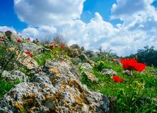 Holyland系列-以色列冬天场面15 图库摄影