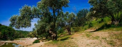 Holyland-Reihe - Berg Carmel lizenzfreies stockbild