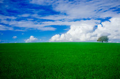 Holyland-Reihe - Eichen-Ebene von Manasseh (Ramot Manasseh) #1 Stockfotografie