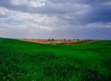 Holyland serie - öken i gräsplan Arkivbild