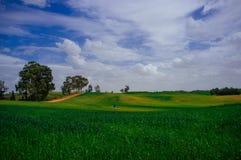 Holyland serie - öken i green#2 arkivbilder