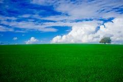 Holyland serie - Dębowego drzewa Manasseh równina -1 (Ramot Manasseh) fotografia stock