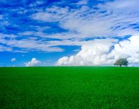 Holyland serie - Dębowego drzewa Manasseh równina -4 (Ramot Manasseh) obrazy stock
