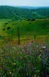 Holyland serie - Gad Hill14 arkivbilder