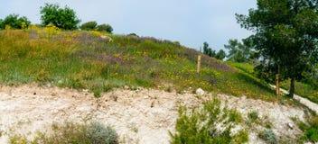 Holyland serie - vår Blossom4 royaltyfri fotografi