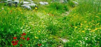 Holyland serie - vår Blossom1 arkivfoto