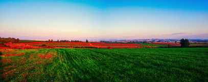 Holyland Series-Central Israel Panorama. Panoramic view of Fields and vistas in central Israel Royalty Free Stock Photos