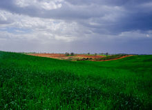 Holyland Series - Desert in green. A view of green wheat field in the Northern Negev Desert with dramatic sky in the background Stock Photography