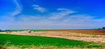 Holyland series- Galilee fields panorama. Wheat field early growth mixed with bare rockey field, blue sky with cirus clouds Stock Photo
