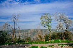 Holyland Series -Judea mountains. A Typical vista of Judea Mountains. In this area, Samson and Delila and Goliath and David, fought and lived Royalty Free Stock Image