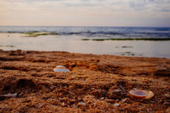 Holyland Series -Palmachim National Park. Dusk colors of Limestone and seashells at Palmachim Nature reserve Stock Photography