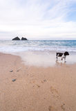 Holywell bay beach Royalty Free Stock Images