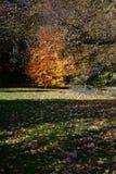 Holywells parkerar, UK, färger av höstsidor Royaltyfri Fotografi