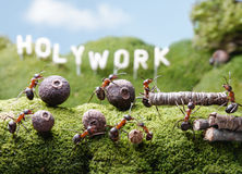 Holywork hills, teamwork, Ant Tales. Ants teamwork at Holywork hills, Ant Tales Royalty Free Stock Image