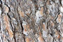 Holz Stockfotografie
