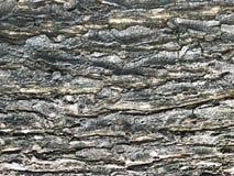 Holz, alte Beschaffenheit der Barke Lizenzfreie Stockbilder