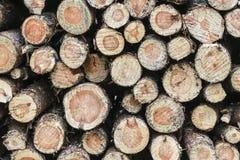 Holz angehäuft oben im Wald Lizenzfreie Stockfotografie