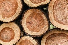 Holz angehäuft oben im Wald Stockfotos